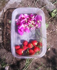 allotment fruits